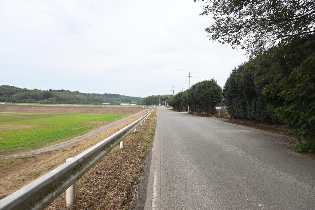 【合志市福原】沖野遊水地に咲く1万坪のひまわり畑!