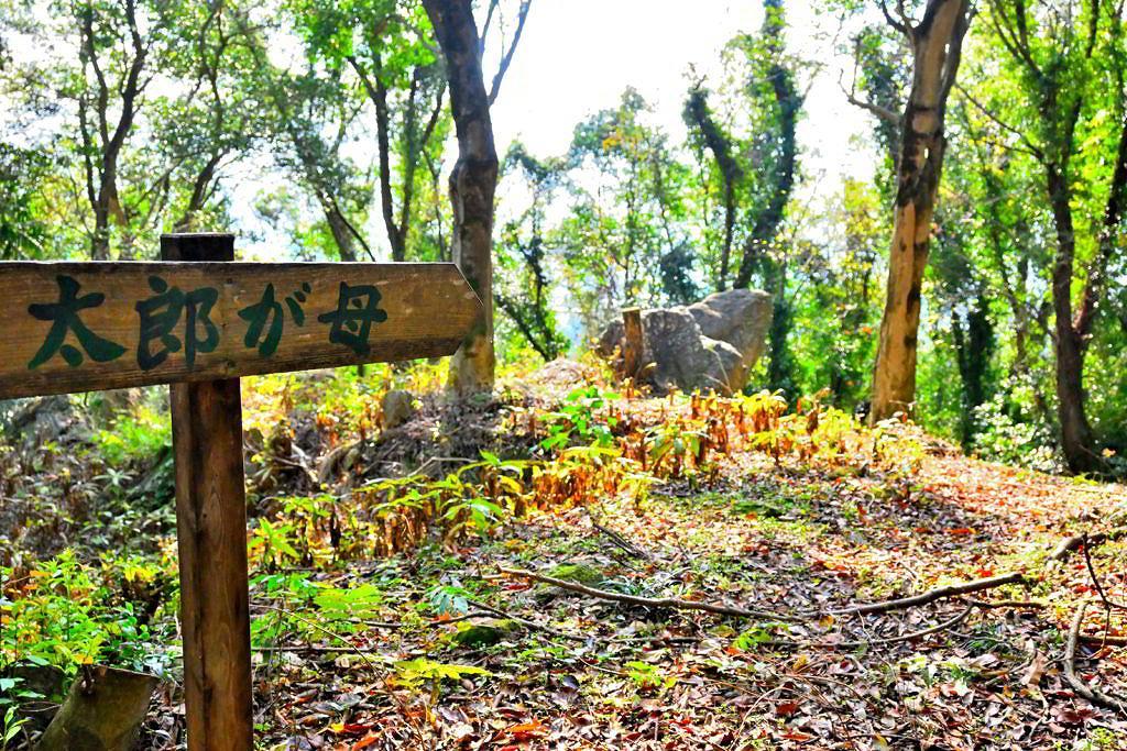 【熊本市北区植木町】楽しむボリューム盛りだくさん!小野泉水公園