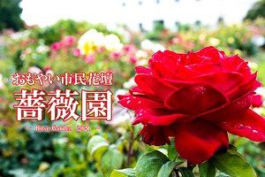 おもやい市民花壇薔薇園