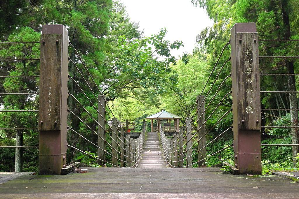 山鹿市 ハス 睡蓮 ひまわり 鹿央古代の森公園